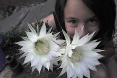 kis kaktusz nagy viraga